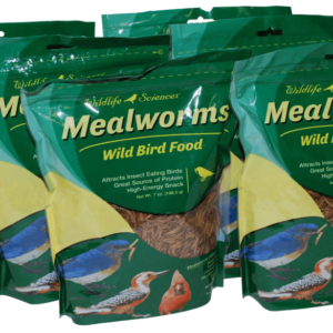 Mealworm-6-Pack-1024x585